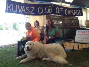 Livestock Guardian Dog Training